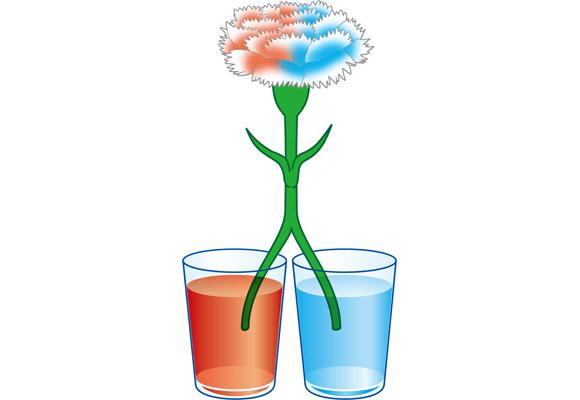 自由研究】白い花をカラフル ... : 自由研究 実験 小学生 : 小学生